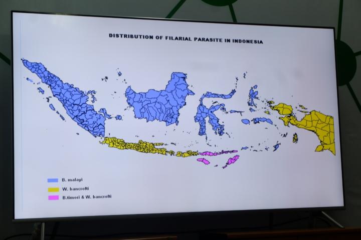 Cacing filaria yang paling berbahaya di daerah berwarna kuning