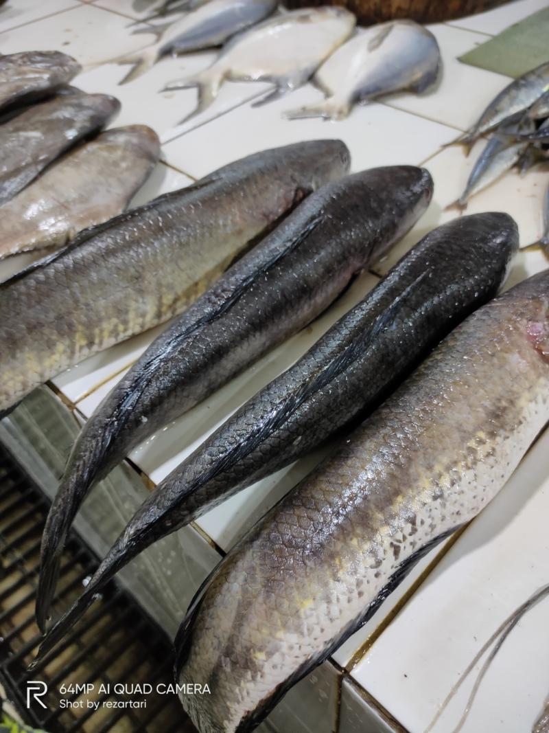 Ikan gabus atau di Palembang disebut iwak delek